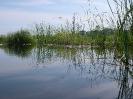 Schwimmteich Ritzlhof_10