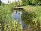 Schwimmteich Ritzlhof_6
