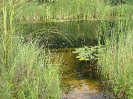 Schwimmteich Ritzlhof_9